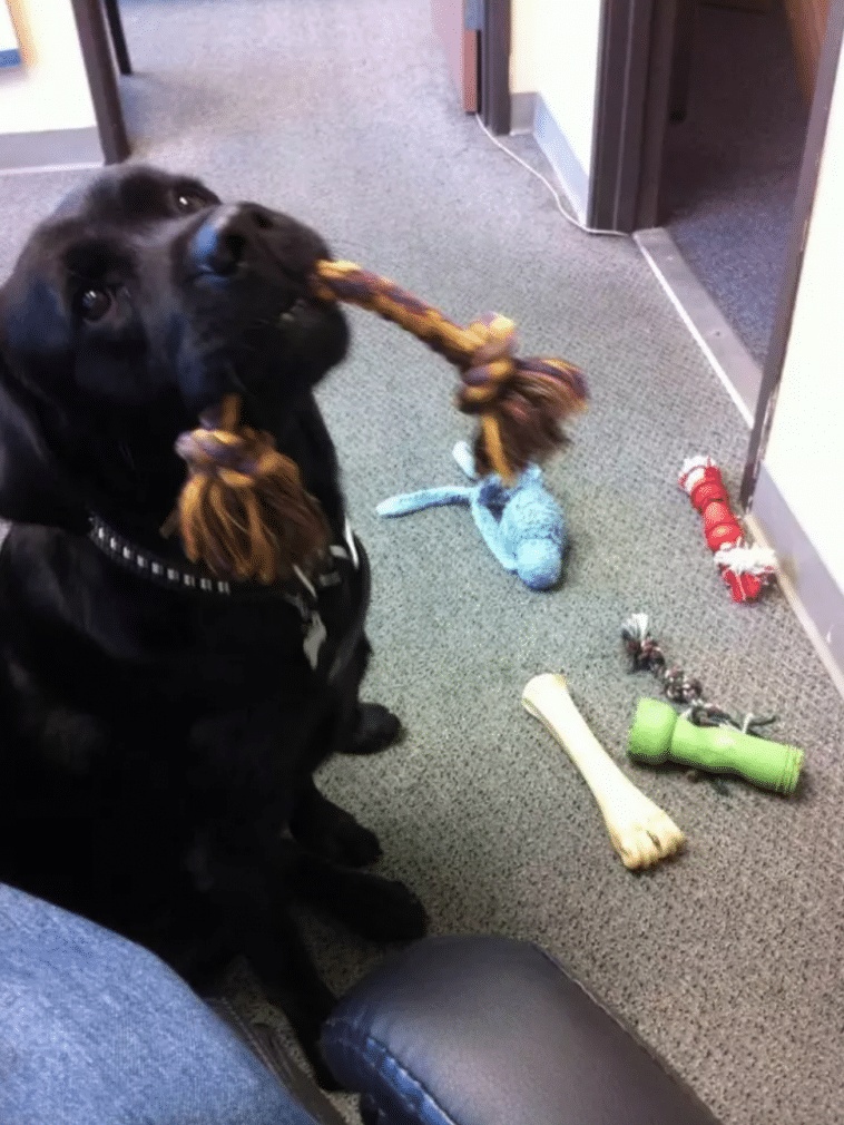 #6 Az utolsó nap a munkahelyemen. Azt hiszem, hogy az irodai kutya azt akarja, hogy maradjak még és játszak vele.