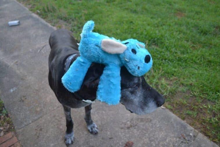 #6 Mivel ma van a 11.-ik születésnapja, ezért megengedtem neki, hogy bármit elhozzon magával a sétára.
