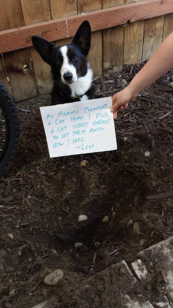 6. A gazdi amikor hazahozott egy macskát, akkor én ástam egy macsak méretű sírt, hogy tudassam velük mit érzek.