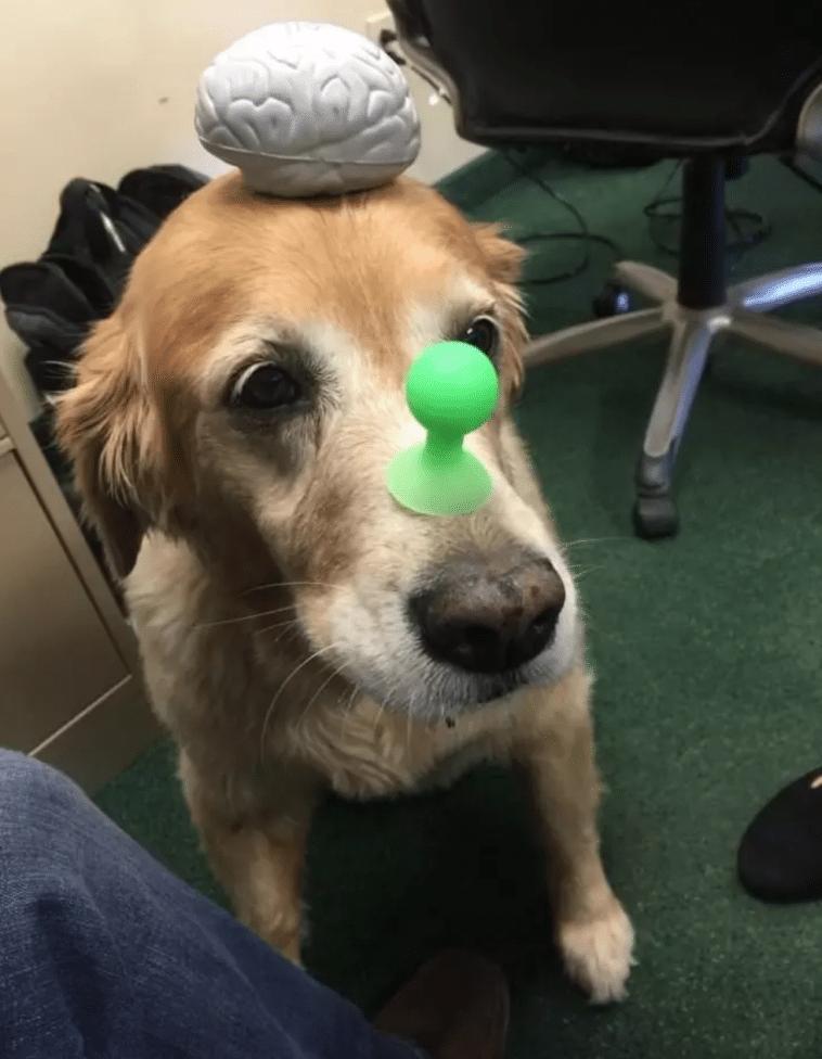 #7 Ma van az irodai kutyák napja.