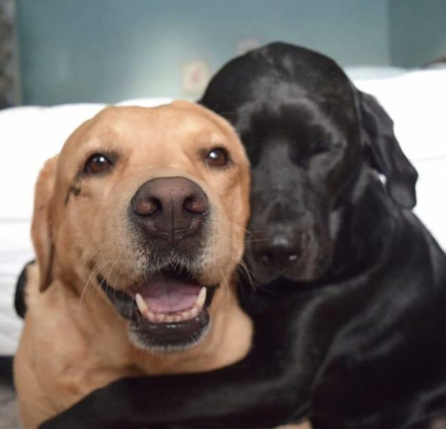 #8 Imádják egymást.