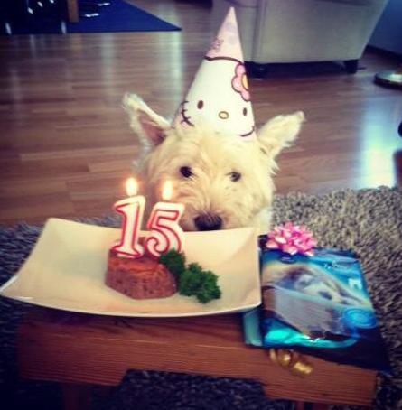 #9 Sajnos a kis drága kutyusom múlt hétvégén halt meg, ez egy 15.-i születésnapi képe.