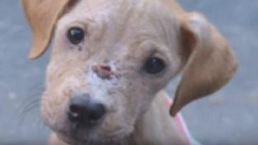 A haldokló kutya és az autista kisfiú találkozása