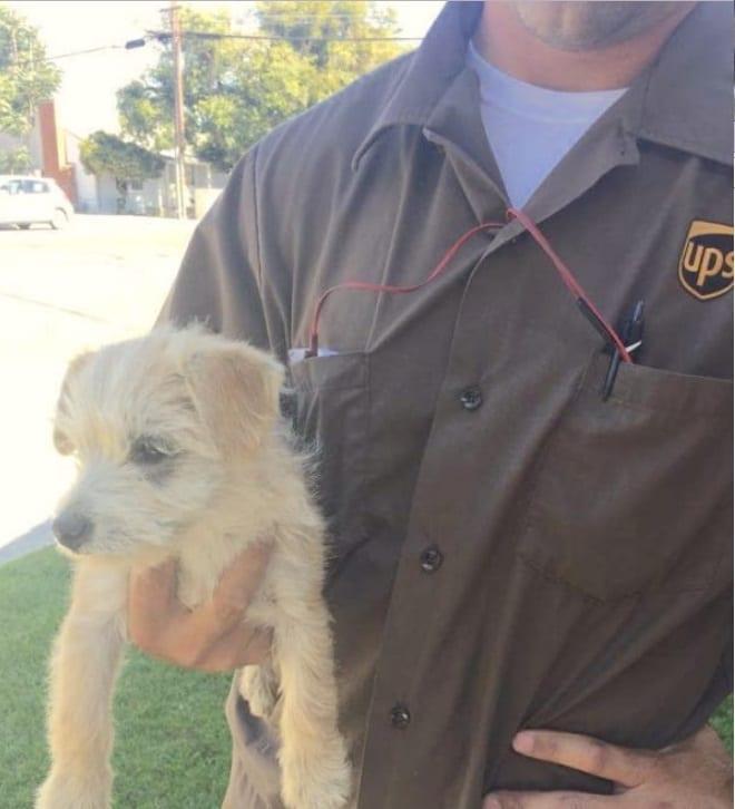 A kölyköt a kaliforniai Modesto-i Stanislaus megyei állatmenhelyre szállították, ahol be is fogadták.