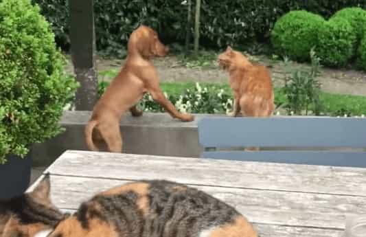 A legegyszerűbb dolgunk akkor van, ha a kutya és amacska is ég igencsak fiatalon találkozik egymással.