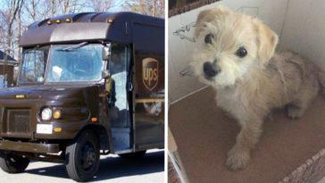 Az UPS vezetője megállt, amikor látta, hogy egy autóból kidobják a kutyust