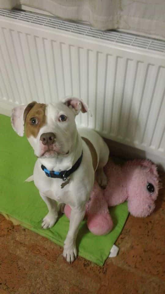 Bromilow és családja végül befogadták Ivor-t. Az egy éves kutya nagyon boldog.