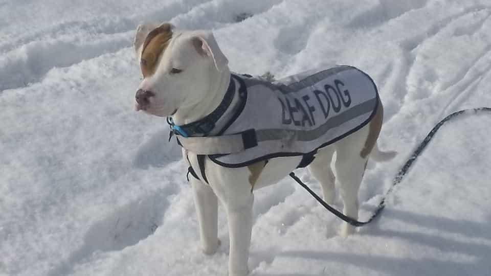 Bromilow elindította FAcebook oldalát Ivor-nak, ahol megosztja az összes kalandját. Megosztotta édes fotóját Ivor-ról a hóban.