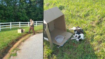 Cop megközelíti az út szélén lévő dobozt, és meglátja a 10 hetes kiskutya mellett fekszik