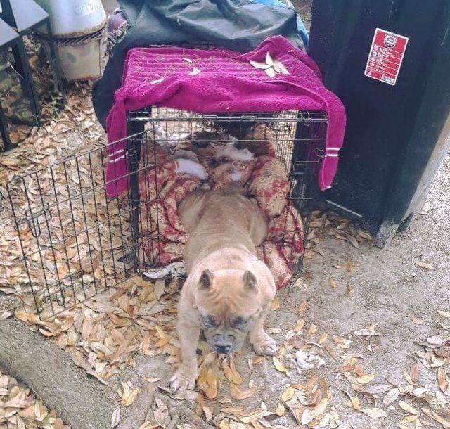 Egy férfi elköltözött Kaliforniába a kutyájával