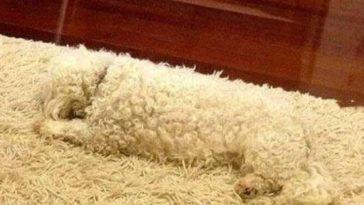 Ez a 13 kutya még a kaméleonoknál is profibb rejtőzködő