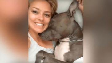 Lesd meg, hogy mit csinál ez az imádni való Pit Bull kutya, amikor a gazdi felébreszti..