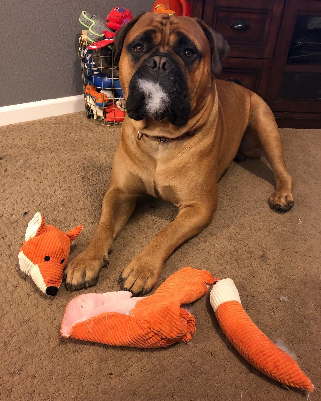 empatikus kutya1