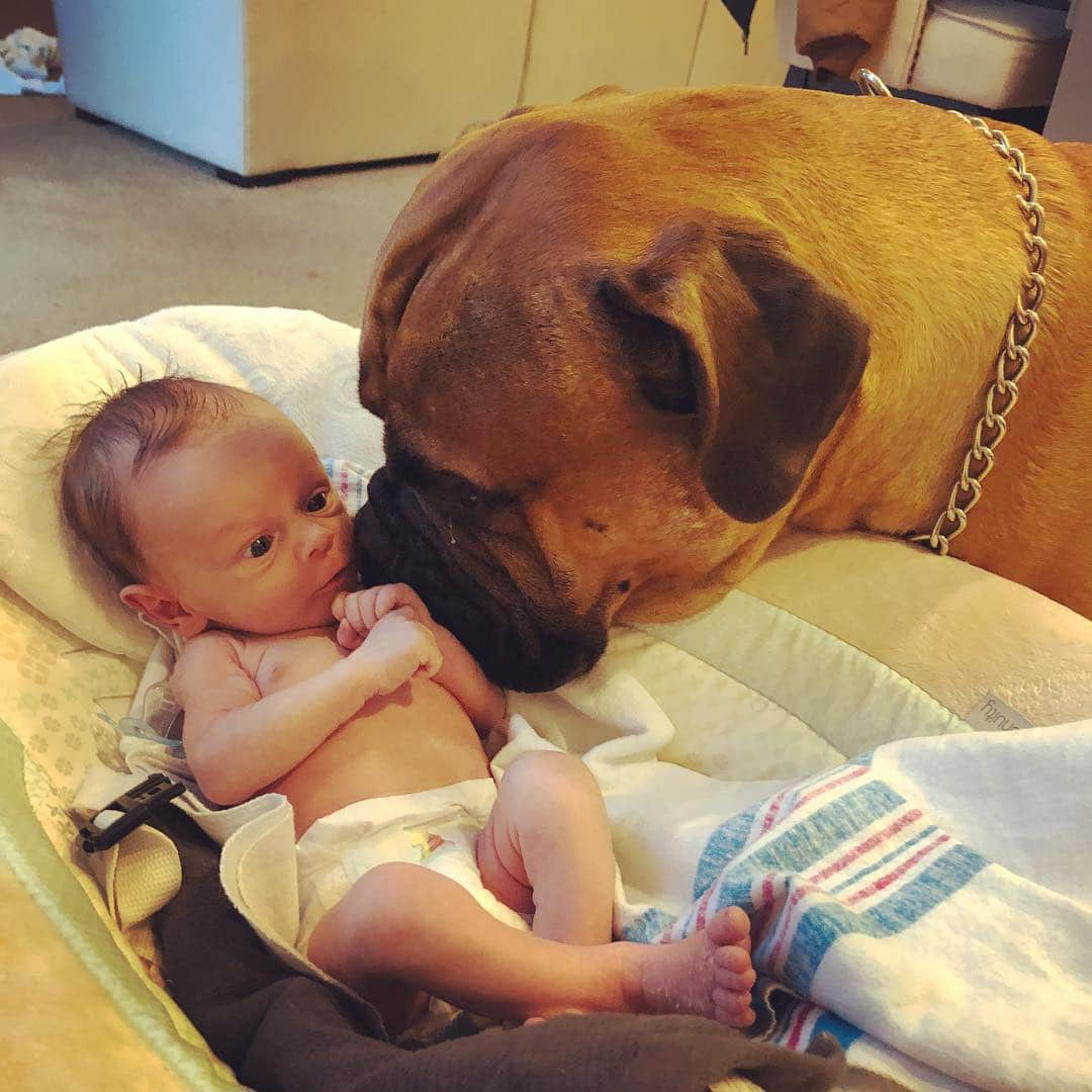 empatikus kutya4