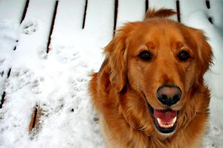10 dolog, amiért érdemes kutyát tartani