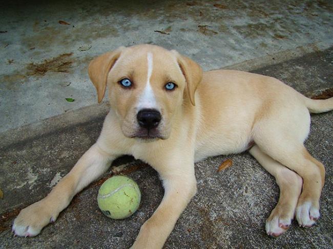 15 csodaszép keverék kutyus, akibe biztos, hogy első látásra beleszeretsz