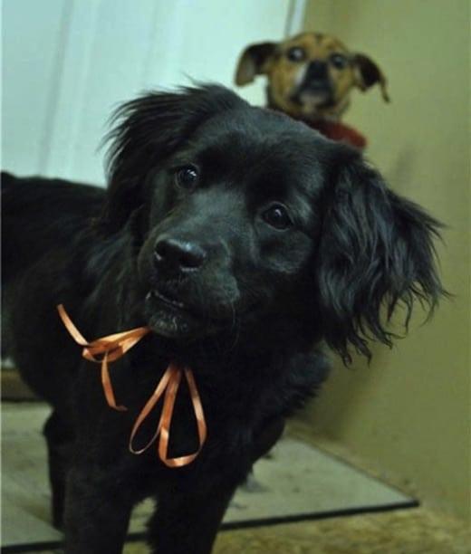 21 kép ami bebizonyítja hogy a kutyák egyéniségek