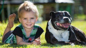 Döbbenetes módon mentette meg kétéves gazdája életét ez a hős kutya