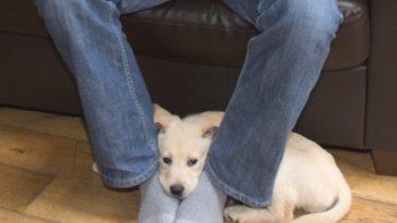Ezért fekszik a kutya a lábadon – nem tudtuk ezt és a többi 8 okot sem