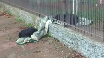 Kivitte az örökbe fogadott kutyus a takaróját, hogy kóbor társa meg ne fagyjon
