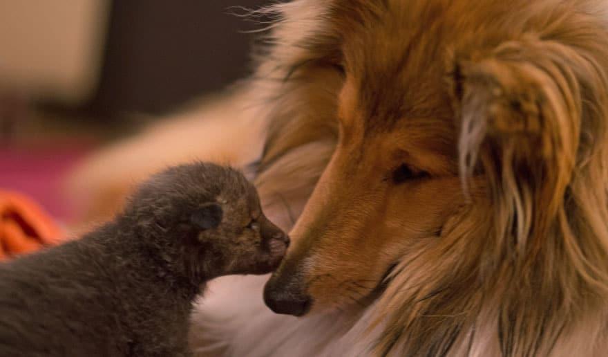 Kutya fogadta örökbe az árván maradt bébirókát