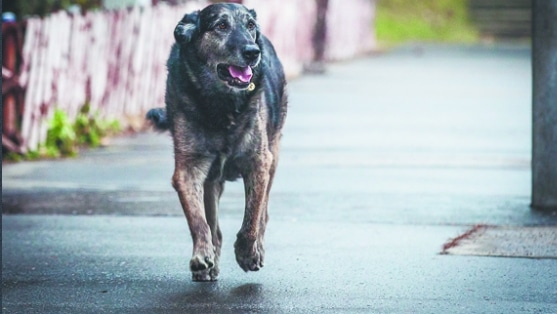 12 évig várta halott gazdiját a mátyásföldi kutya