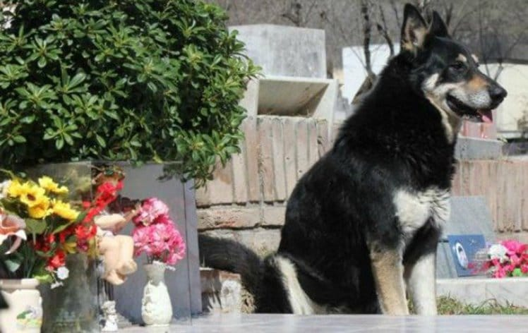 10 csodálatos történet a kutyahűségről