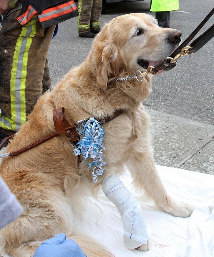 Hősként tisztelik a vak kutyát