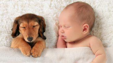 Kisbabák és kedvencek