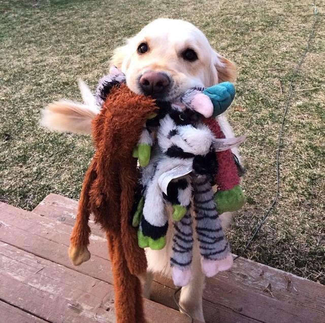 8 jel, hogy a kutyád imád téged1