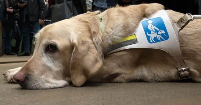 Nem voltak hajlandók vizet adni a vakvezető kutyának a kávézóban