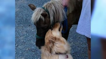 kutyus odarohan a lóhoz