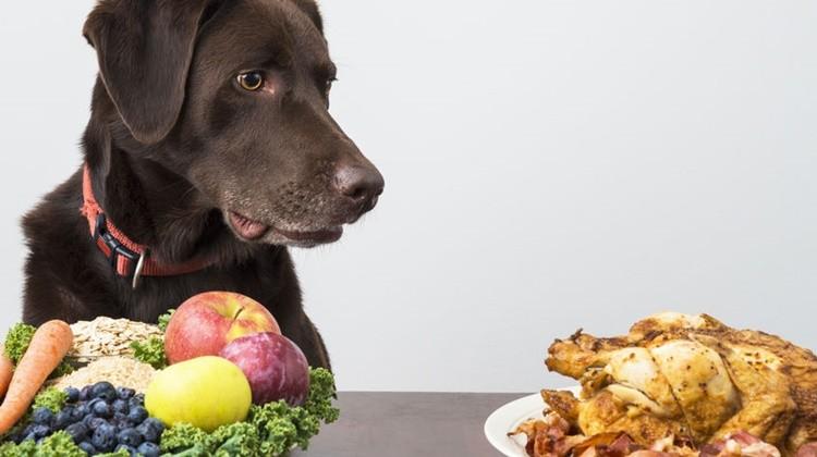 Ételek, melyektől egészséges lesz a kutyád