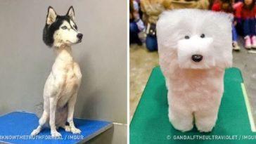 állatkozmetika olyan rosszul sikerült
