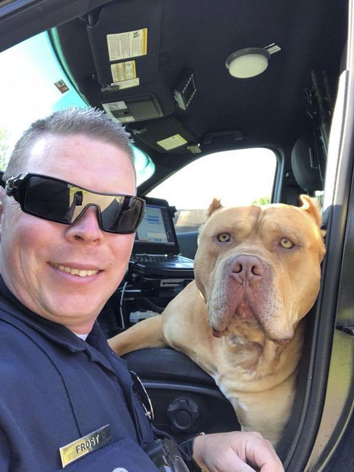 """""""Veszélyes kutyához"""" hívták ki a rendőrt"""