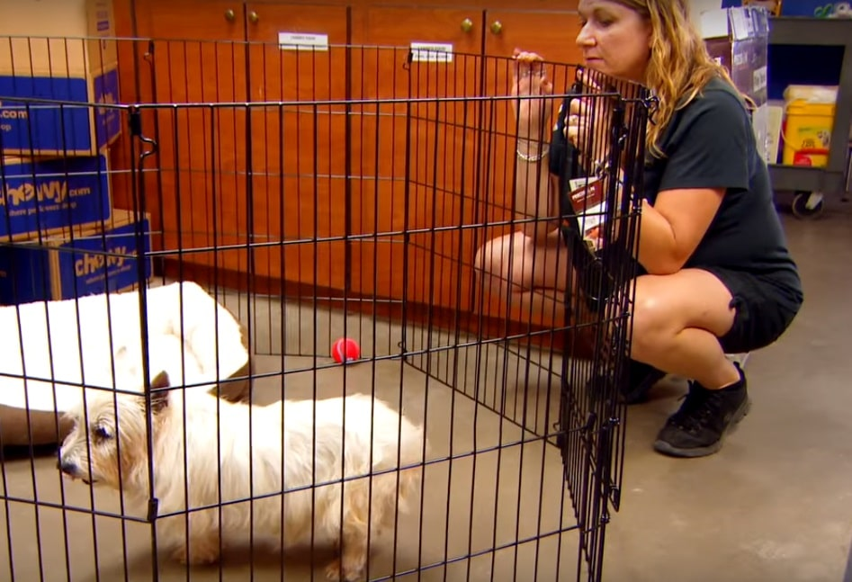12 éves kutya kezdetektől fogva be volt zárva