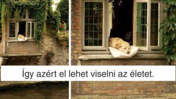12 kutya, aki jobban él mint mi