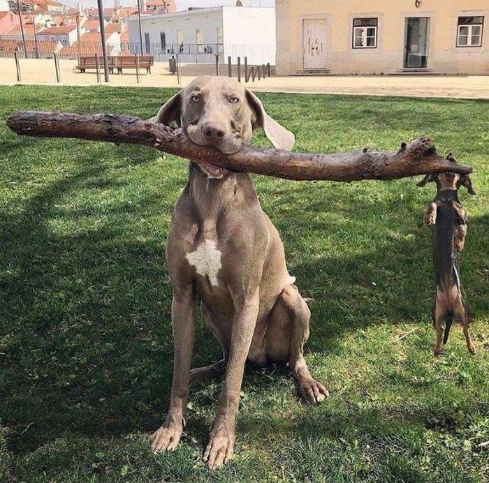 4f4cd7237 16 fotó teljesen vidám teremtményekről, akiket kutyáknak hívunk