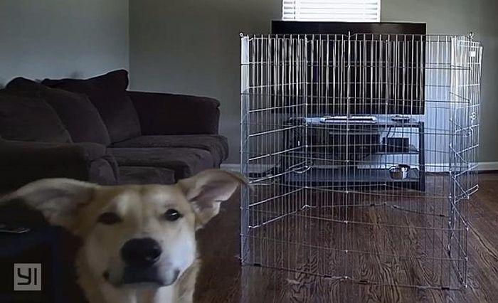 16 vidám fotó kutyákról