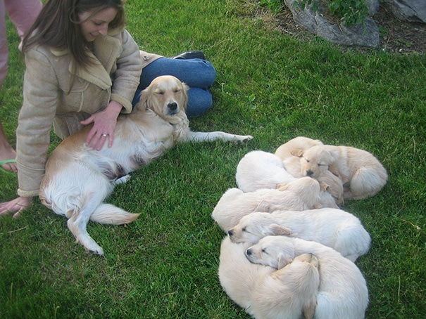 19 hihetetlenül boldog kutyaszülő a kicsinyeivel