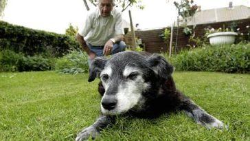29 évig élt a világ legidősebb kutyája