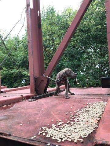 3 napon át élt egy vagon tetejéhez kötözve ez a kutya