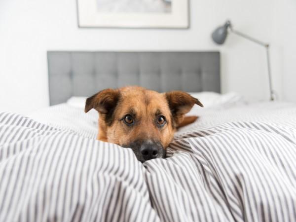7 meglepő ok, hogy miért jó minden éjjel a kutyáddal aludni