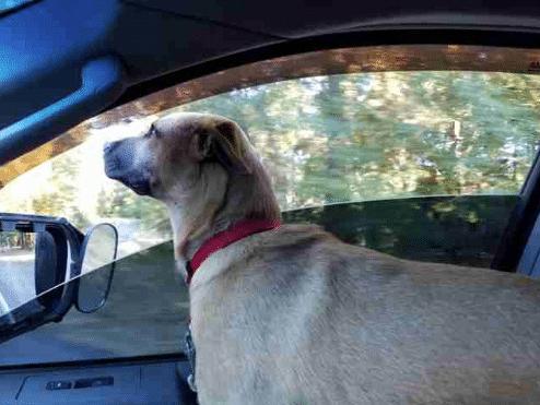 A kutyát a sínekhez kötözve találták meg