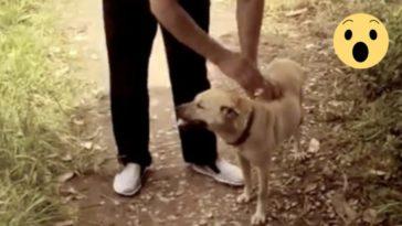 A kutya kiszagolt valamit