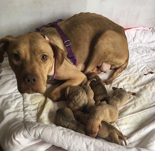 A megvert kutya alig bírt felkelni