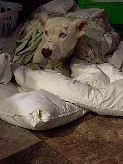 A megvert kutya fél, hogy ismét rosszul bánnak vele