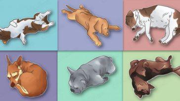 A te kutyád milyen pózban alszik