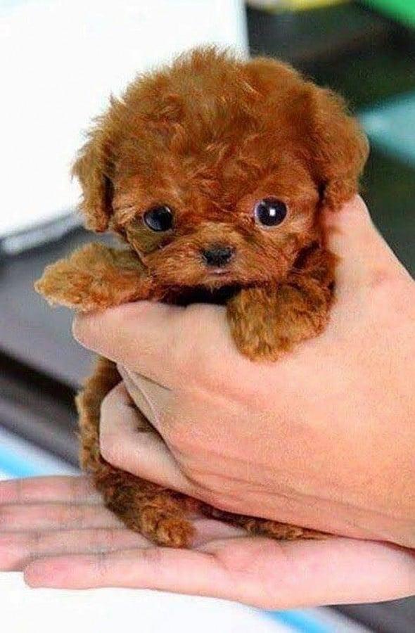 A világ legcukibb kiskutyái