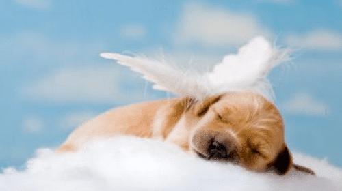 Az első napon Isten megteremtette a kutyát